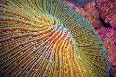 2009-04-13-Corail-champignon-2-.jpg