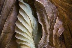 84bca5f3e429aaa0671258e8ae86e51f-autumn-leaves-nature-pattern
