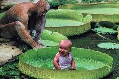 bebe-nenuphar.jpg