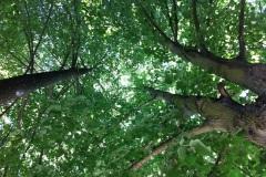 bien-sous-les-arbres.jpg