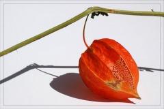 blog-dsc_1192-amour-en-cage-orange-et-dentelle