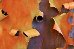 ecorce-arbre-07-Lécorce-des-arbres